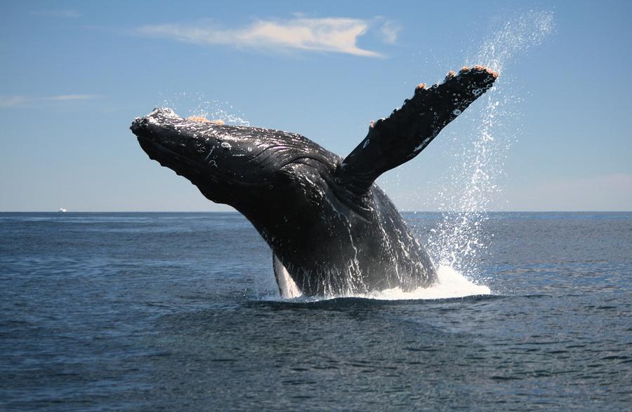 биткоин-киты, владельцы монет, распродажа биткоинов