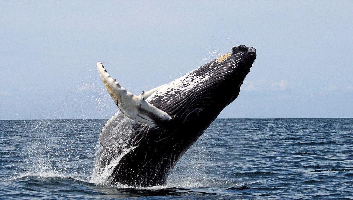 Bloomberg: Мог ли «кит» стать причиной падения курса биткоина?