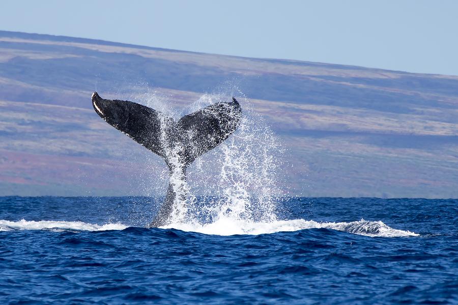 Токийский «кит» продал биткоины Mt. Gox ещё на $230 млн.