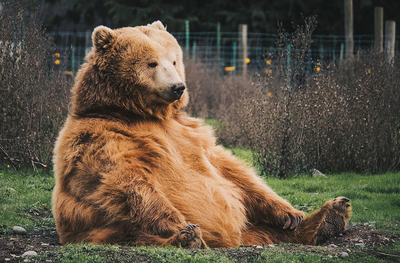 Мнение: Биткоин находится в середине рынка «медведей»