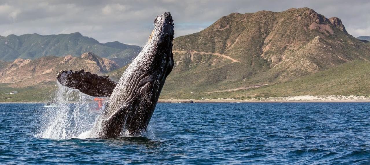 whale baja gettyimages 685018095 xlarge - «Киты» активизировались после того, как биткоин подешевел ниже $9500