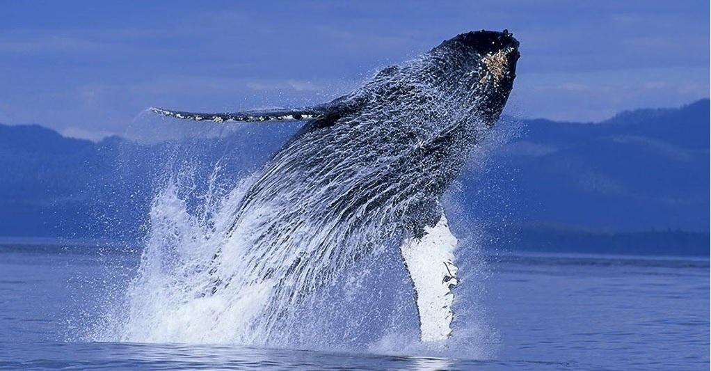 3088 - Один «биткоин-кит» утверждает, что криптобиржа Binance подделывает свои объёмы торгов
